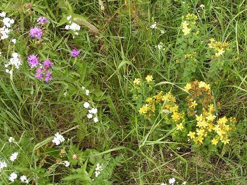 краснодарского края растения фото и названия